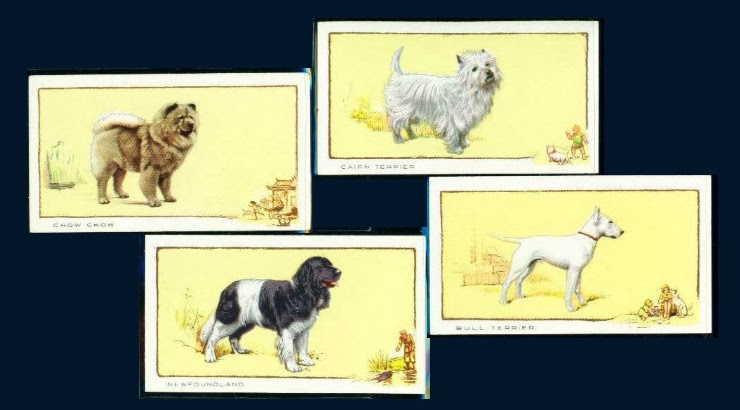 1934 GALLAHER LTD cigarette card DOGS A SERIES OF 24
