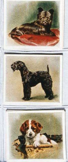 1936 Phillips Cigarette Cards Our Puppies