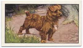 1936 Gallaher cigarette cards Dogs Series of 48