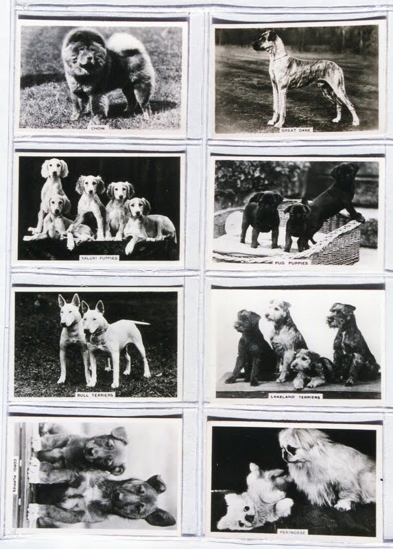 1939 Senior Service (Pattreiouex) Cigarette Cards Dogs Series of 48