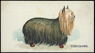 1890 Goodwin trade card Dogs of the World