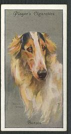 1940 Players cigarette cards Dogs Heads (Silver background)