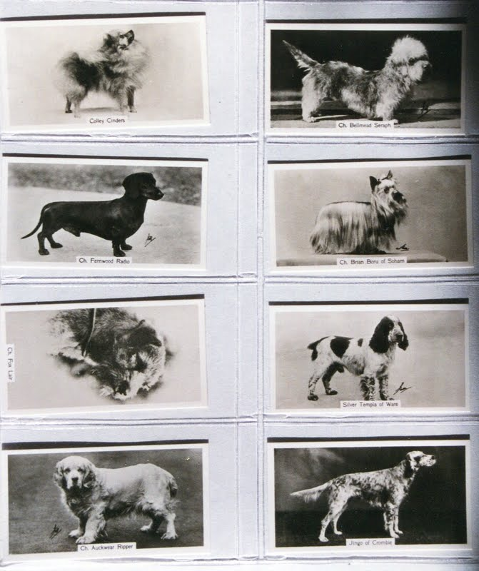 1938 Sinclair cigarette card A Series of Champion Dogs