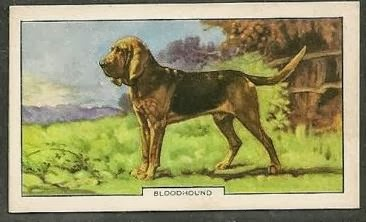 1938 Gallaher Second Series of Dogs