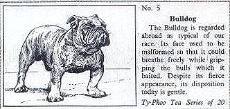 1955 Typhoo Teas trade cards Some Popular Breeds of Dogs